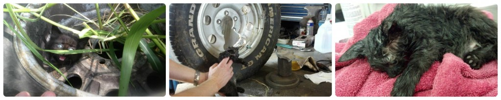 Kitten_in-Tire_Collages-1